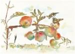 Mills-apples