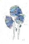 Blue Poppys 2