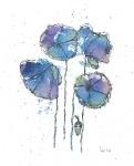 Blue Poppys 3