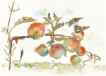 Pommes-du-moulin