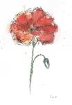 Poppys 3