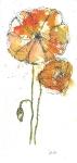 Yellow Poppys 2